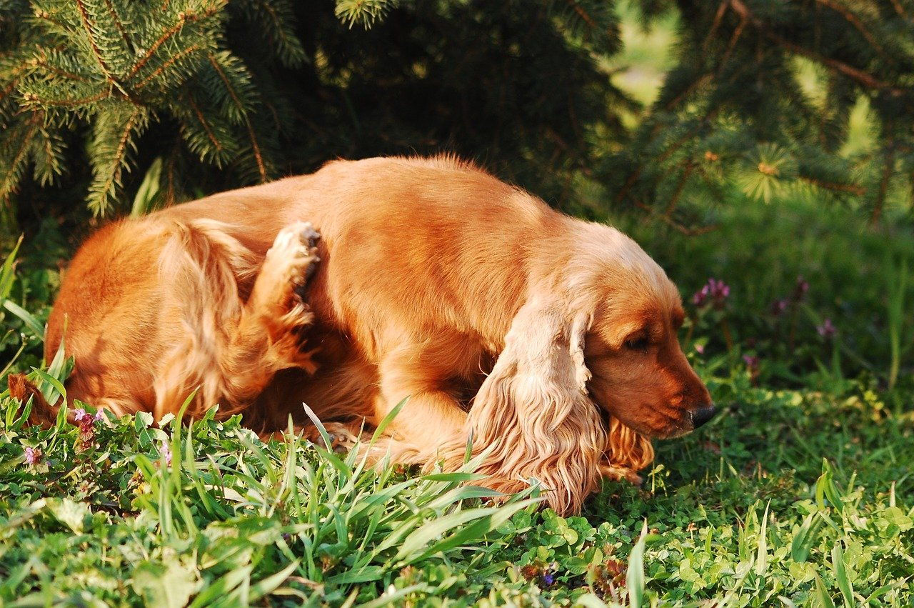 Compulsive Licking, Biting, and Scratching in Dogs