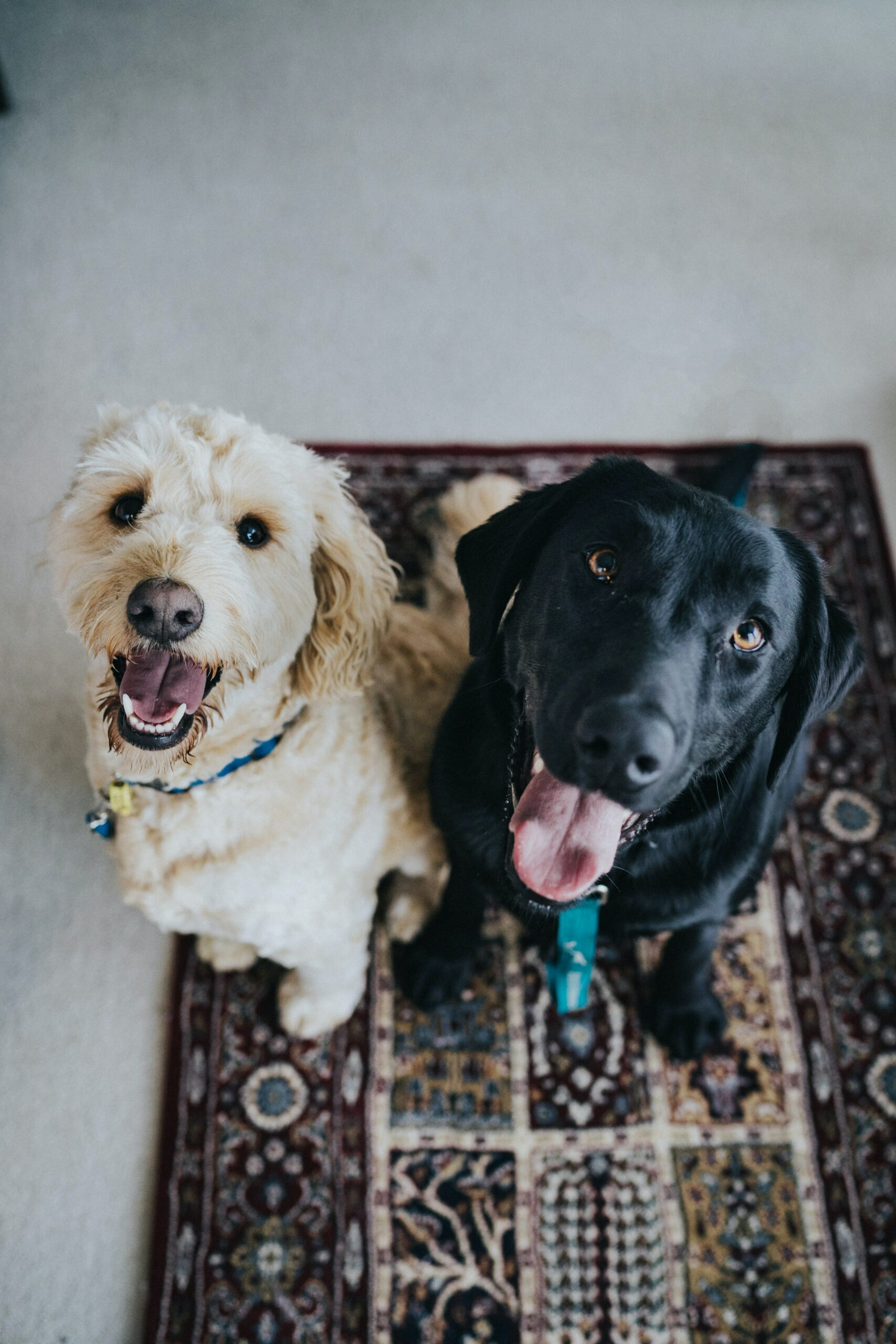 Separation Anxiety in Dogs: Everything You Need to Know
