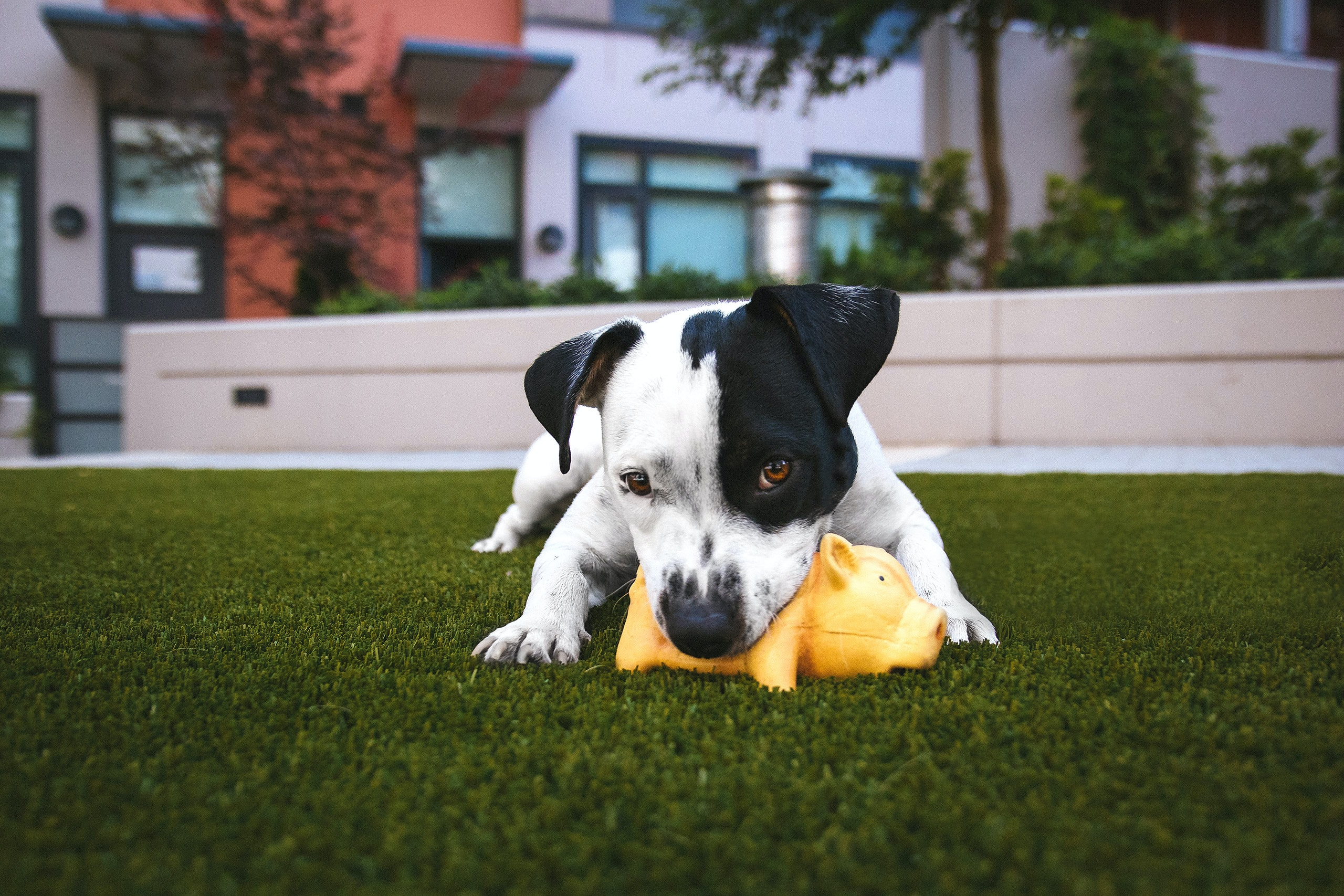 How To Do Obedience Training For A Stubborn Dog
