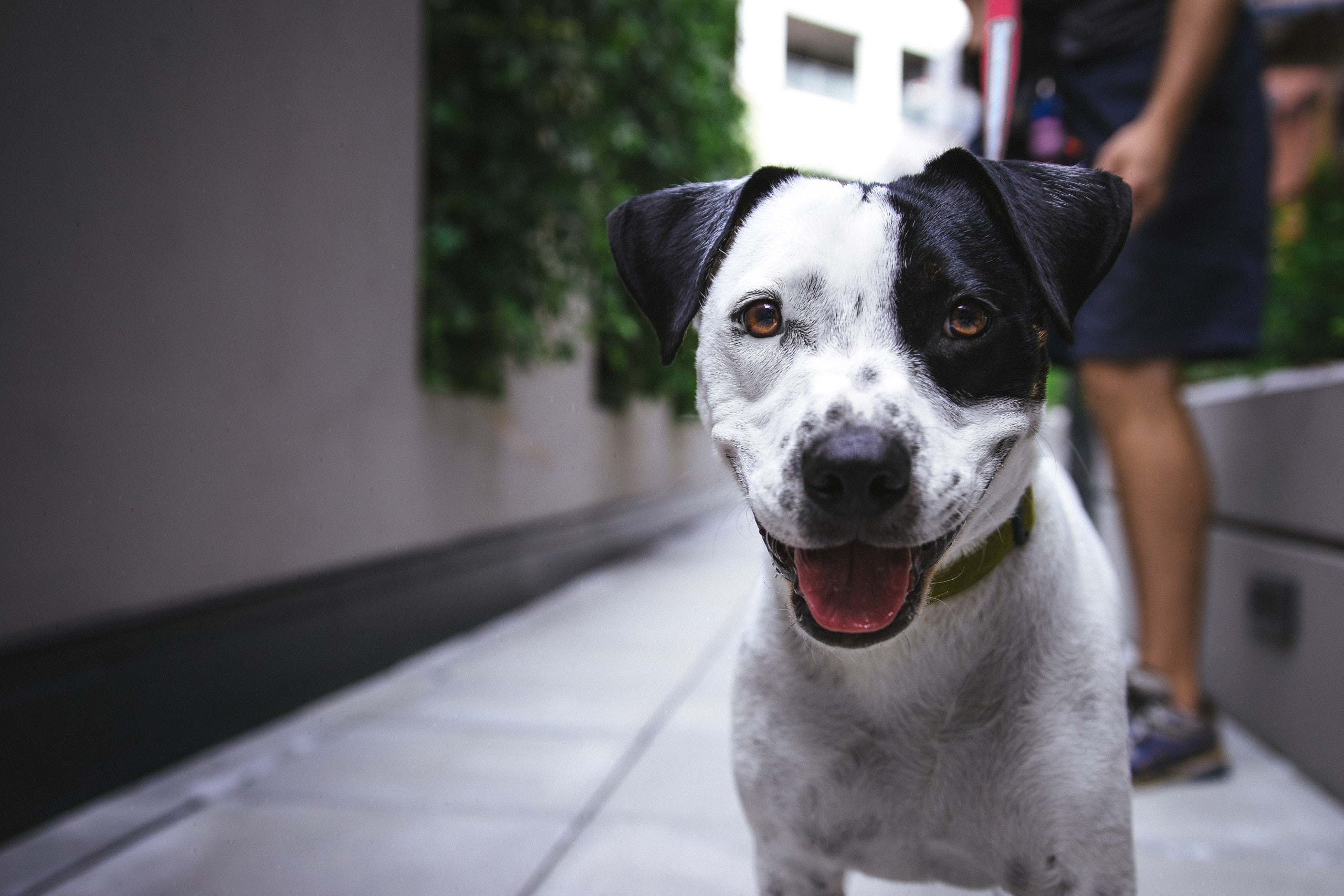 Is It Possible to Live with a Dog in an Apartment?