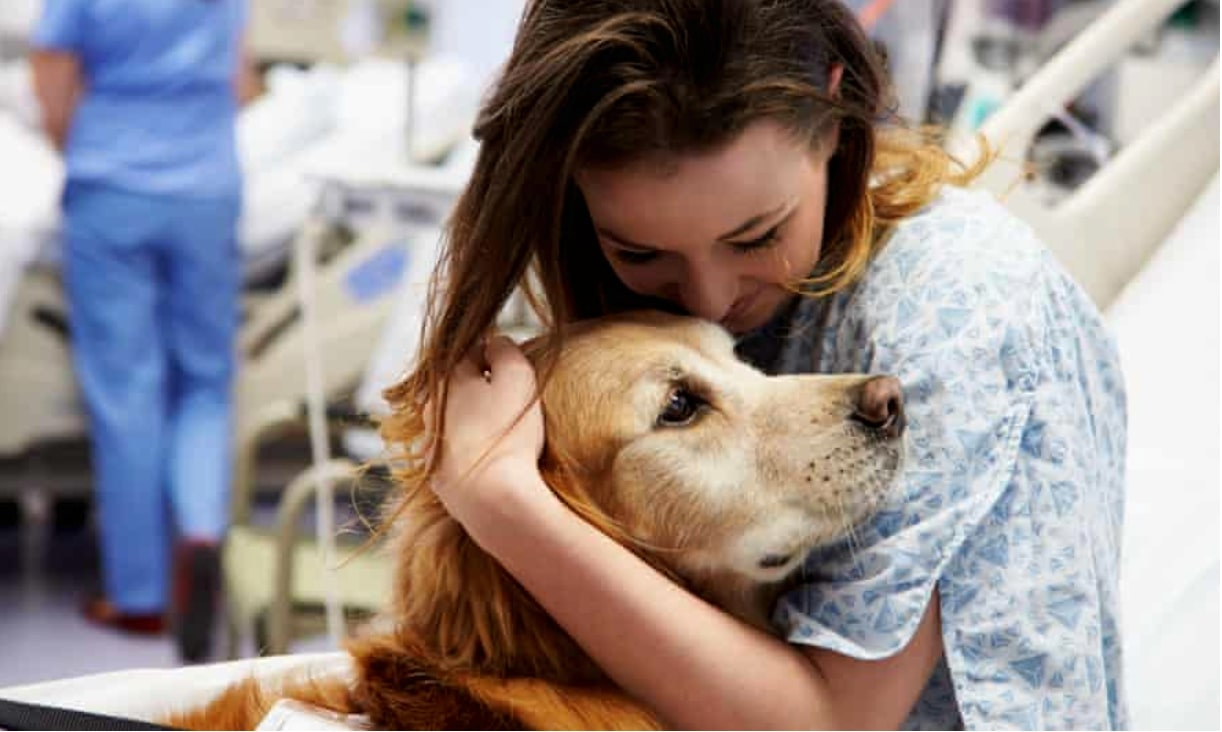 5 Tips To Help You Cope When Your Dog Gets Sick