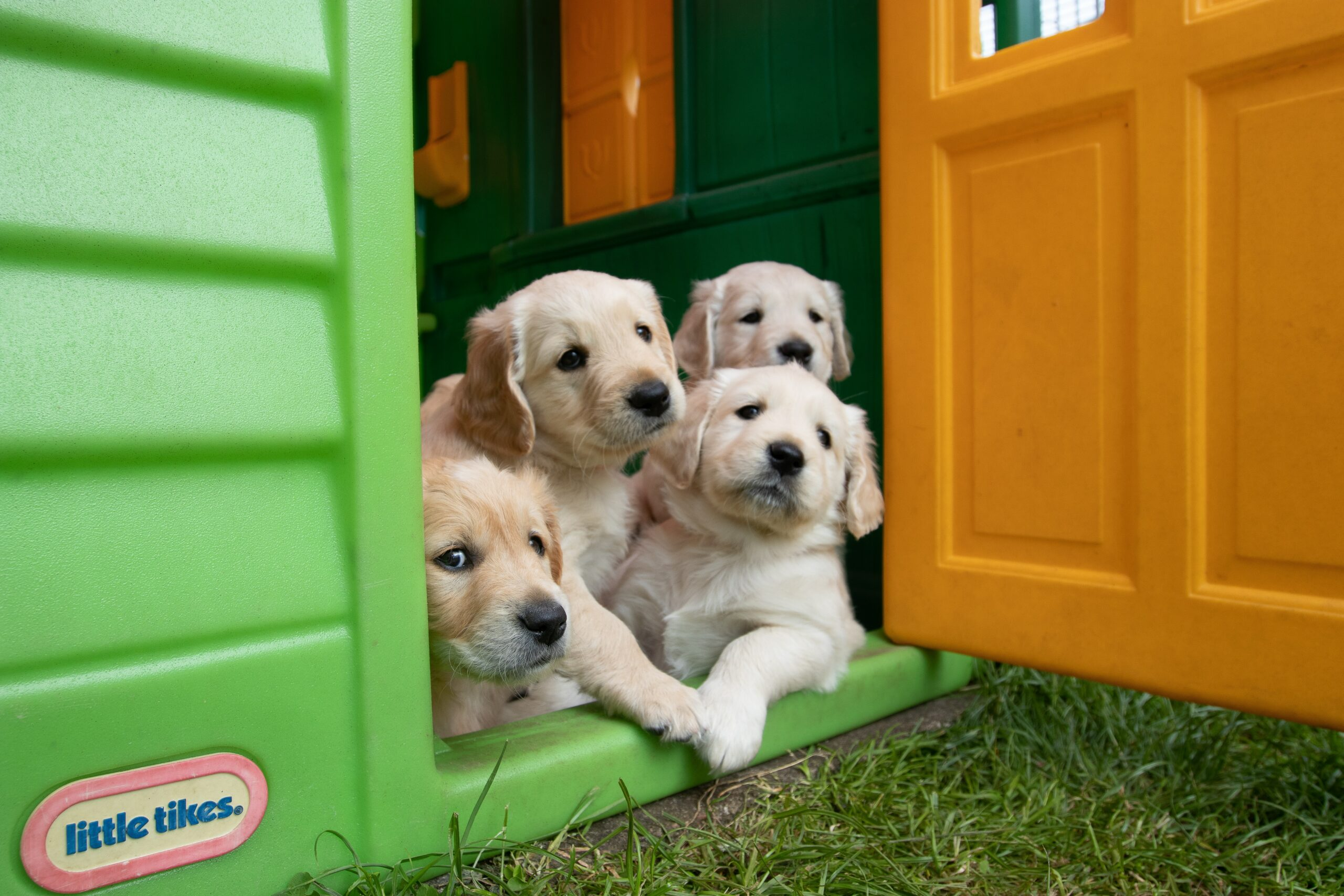 Best Tips for Setting Schedules and Developing a Routine for Your New Puppy