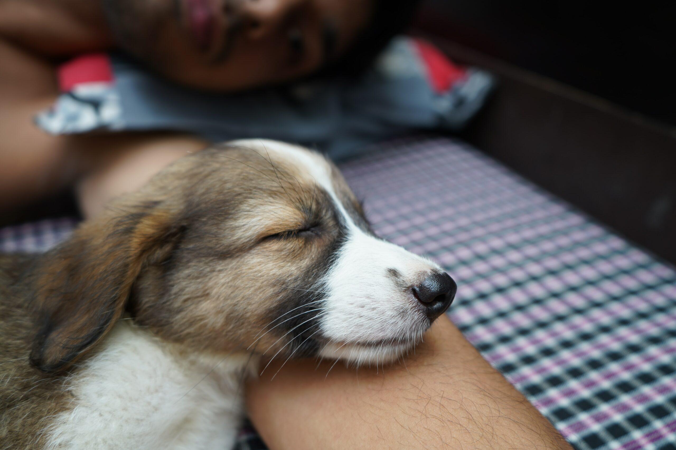9 Surprising Health Benefits of Pets