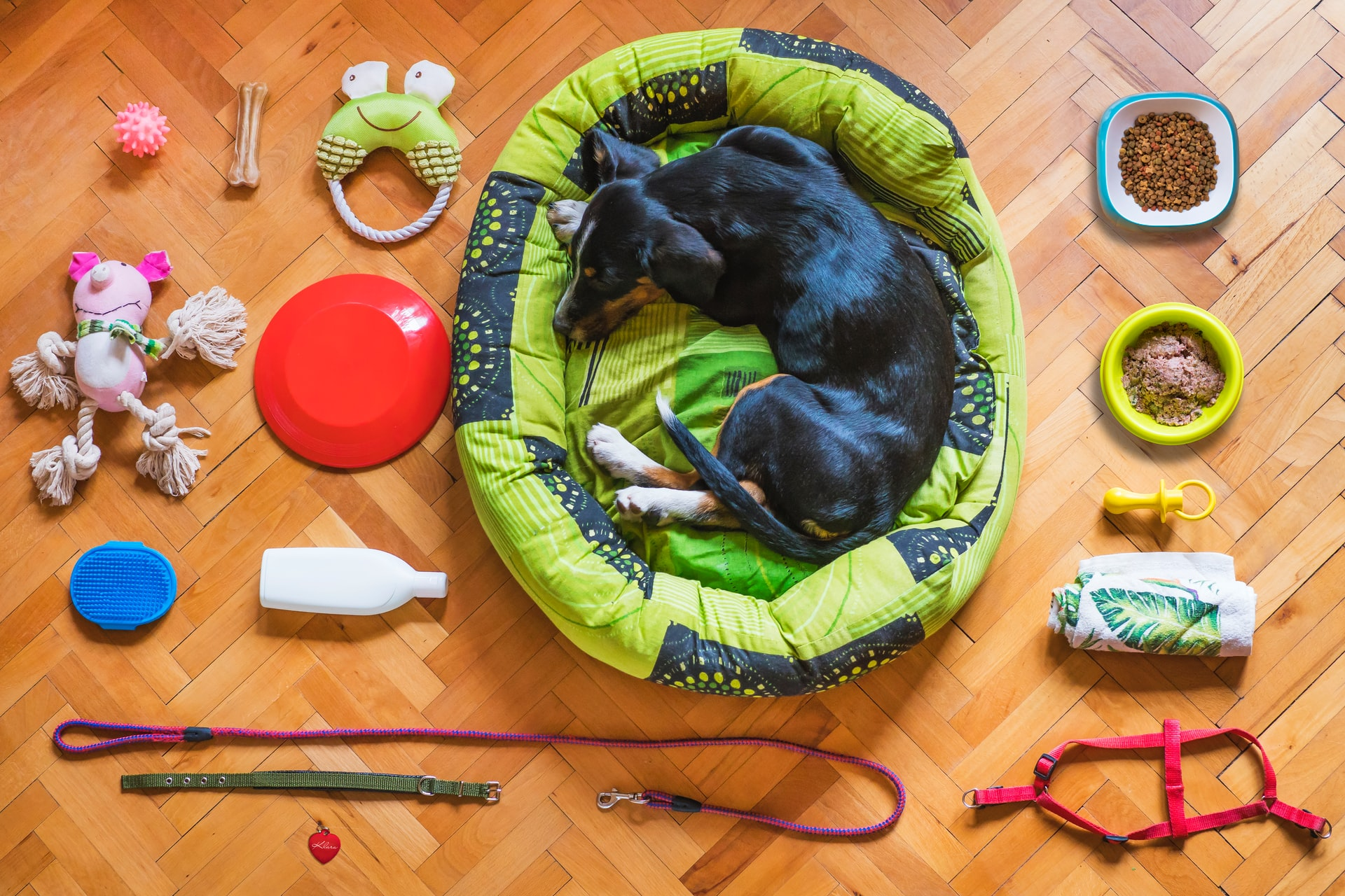 Simple Ideas for Organizing Pet Supplies and Toys