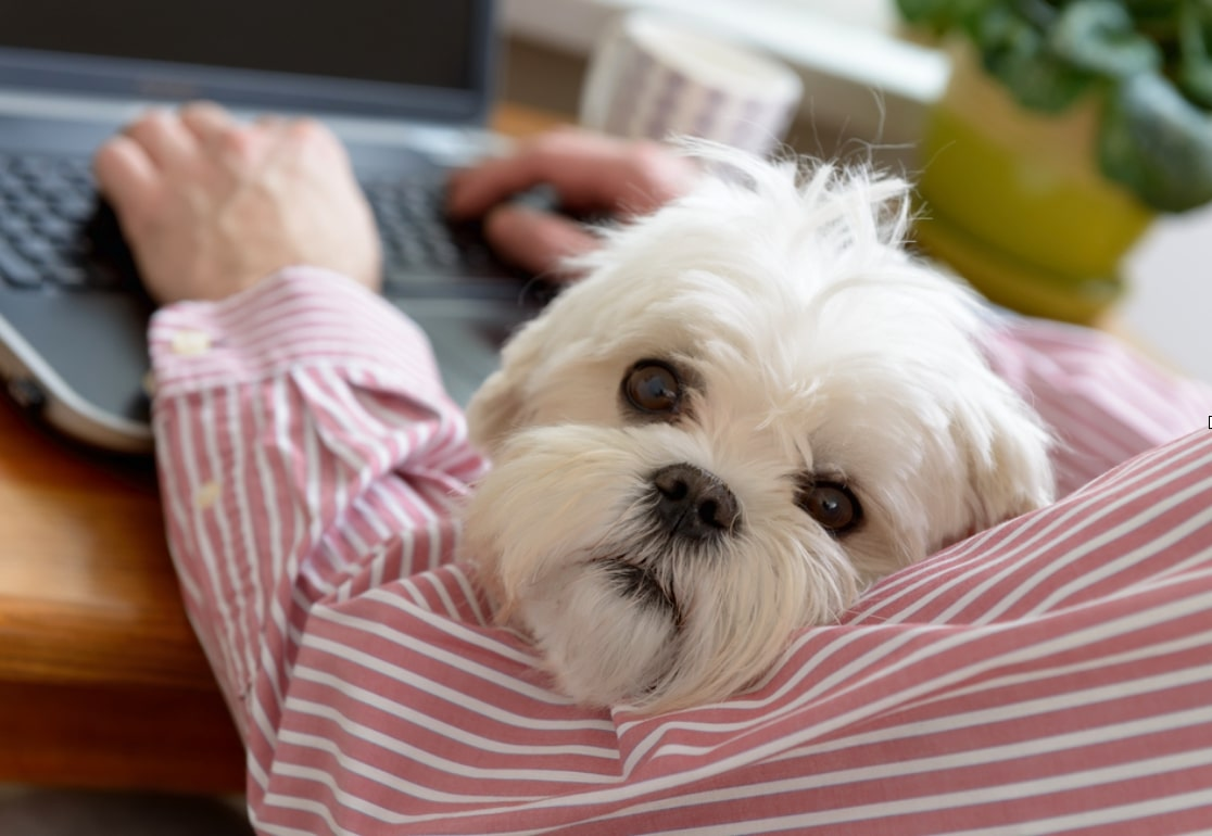 How to Keep Your Dog Entertained While Working from Home