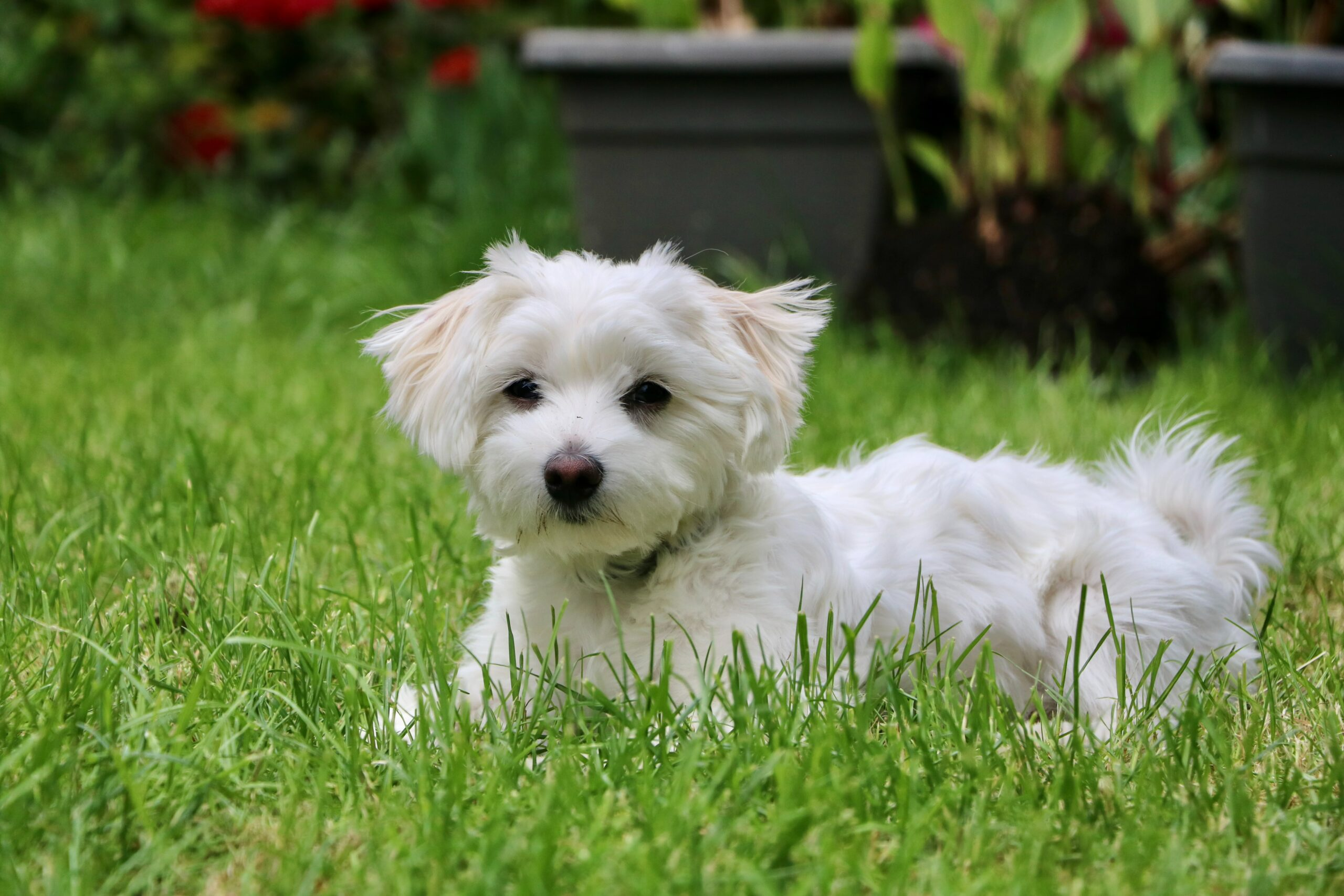7 Inspiring Ideas for Your Dog's Dream Backyard