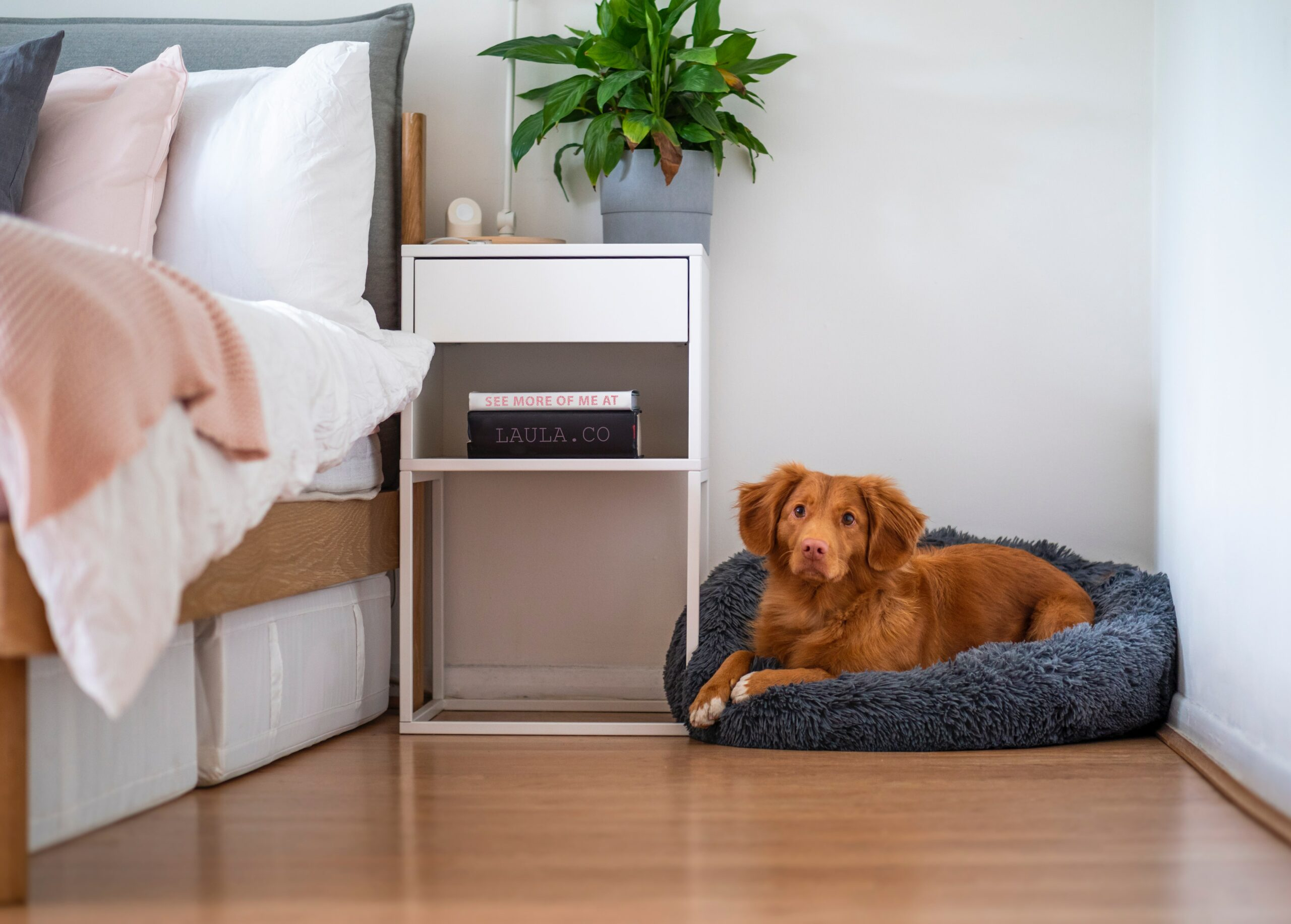 4 Tips To Keep Your Apartment Safe For Dogs