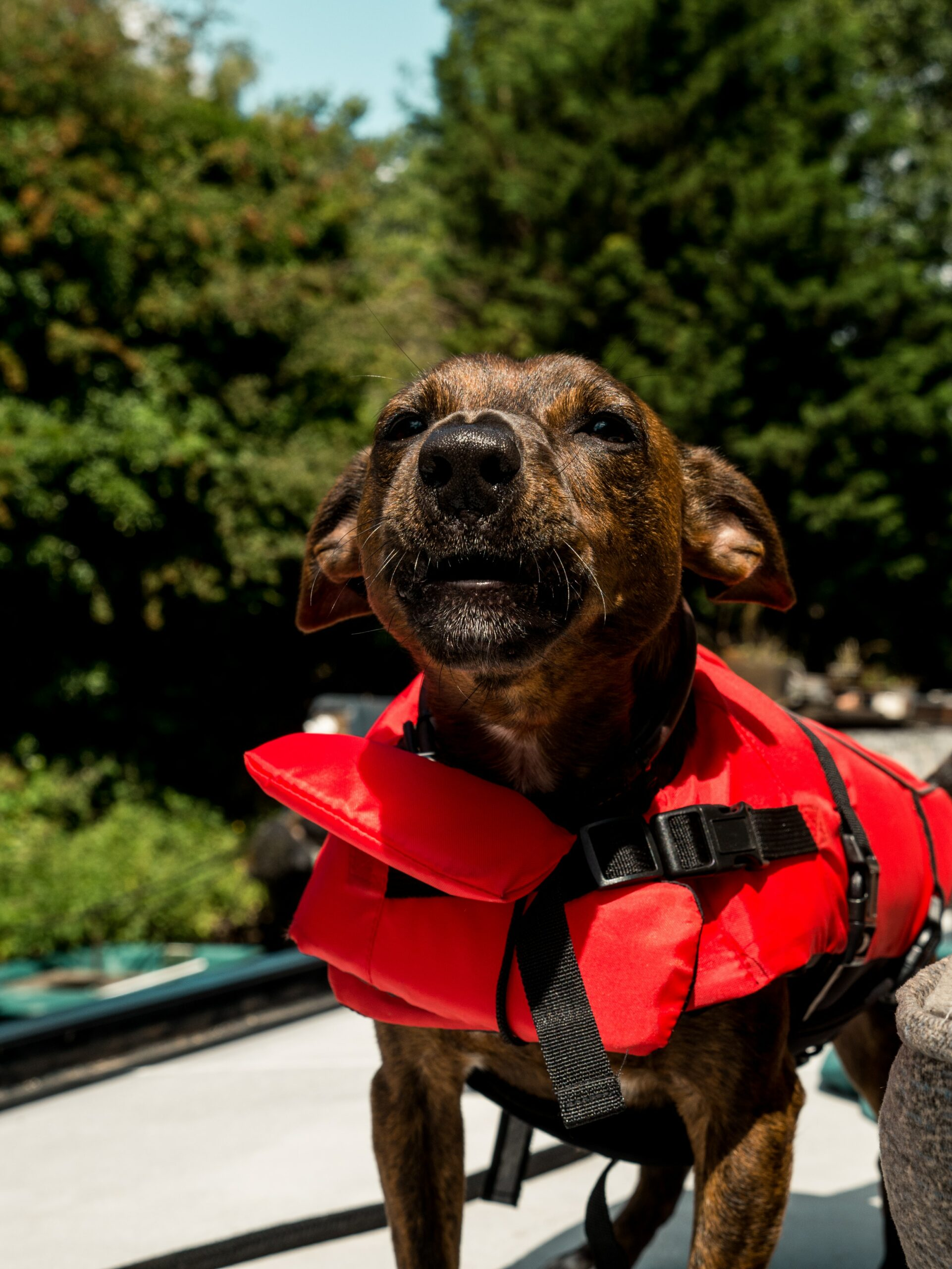 Eight Tips To Prepare Your Dog For Natural Disasters