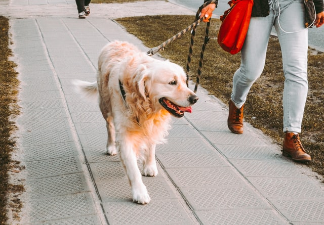 Things to Considers When Hiring a Dog Walker