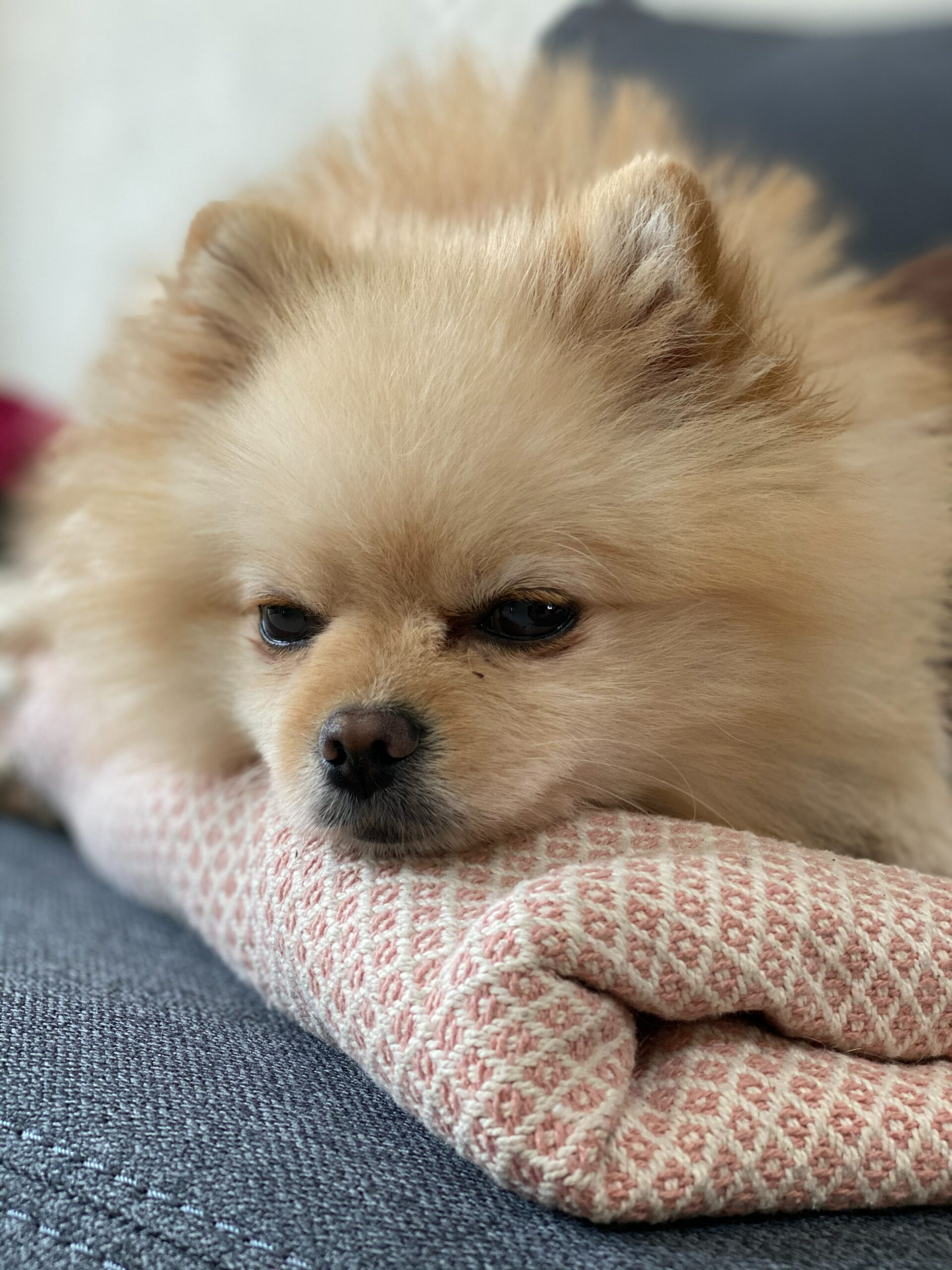 Signs Of Poor Health To Watch For As A Pet Owner